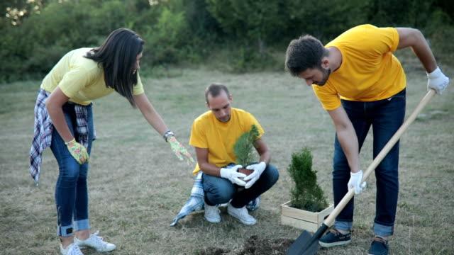 Small group of volunteers prepares seedlings for planting video