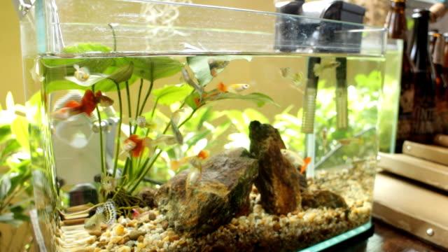 Small healthy fish in tropical community aquarium video