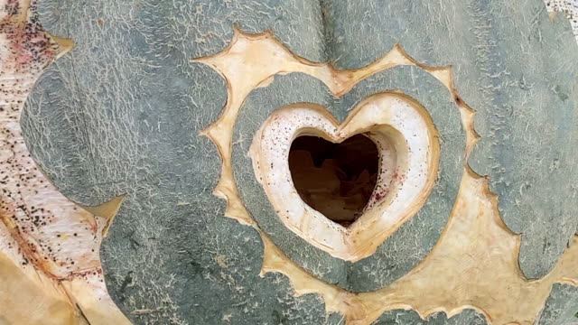 small hollow in a tree in the shape of a heart