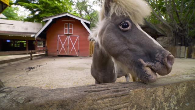 Small horse, Pony in barn