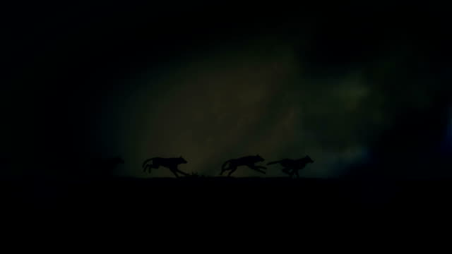 vídeos de stock e filmes b-roll de small pack of wolves running through a lightning storm - coiote