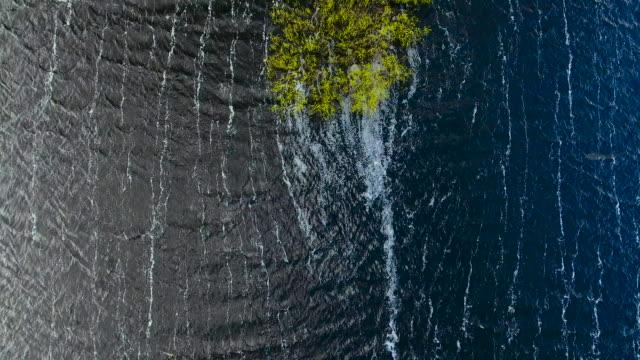 kleine stücke pf land und bäume wachsen im fluss pripjat. belarus. - weißrussland stock-videos und b-roll-filmmaterial