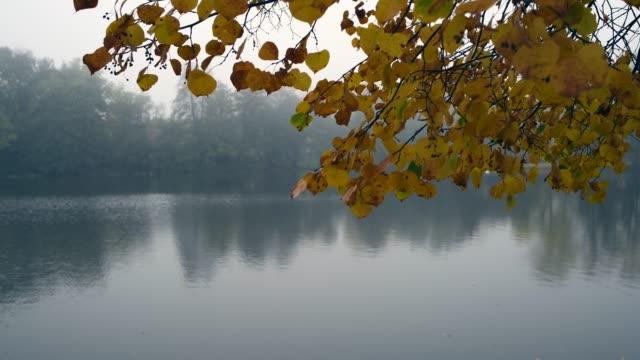 small pond in autumn in a fog - ноябрь стоковые видео и кадры b-roll