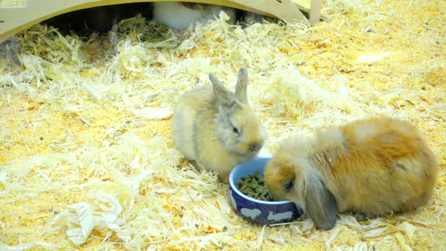 Small rabbits eat and have fun in the paddock video