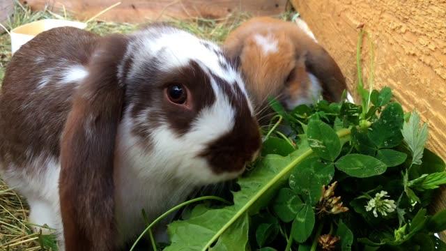 Small rabbits eat