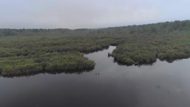 liten flod och buskig våtmark täckt av stark morgondimma. poconos, pennsylvania, usa. antenn drönare video med framåt kamerarörelse. - poconobergen bildbanksvideor och videomaterial från bakom kulisserna
