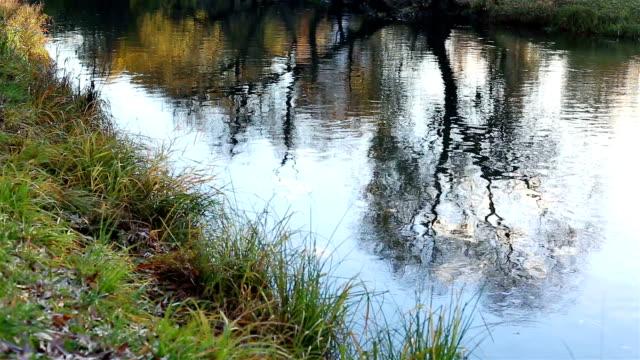 Small river. Camera movement video