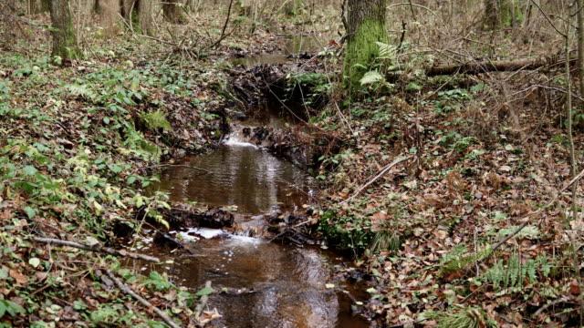 秋季小河 - 枝 植物部分 個影片檔及 b 捲影像