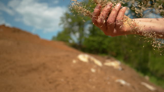 CLOSE UP: Small seeds come flying out of farmer's hand sowing grass on sunny day SLOW MOTION, CLOSE UP, DOF: Small seeds come flying out of farmer's hand sowing grass on sunny day. Seeds get scattered as unrecognizable female gardener sows wheat in the fertile cultivated land. sowing stock videos & royalty-free footage