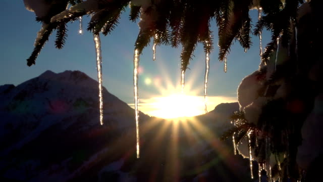 CLOSE UP: Small sparkling icicles on snowy spruce tree at golden winter sunrise video