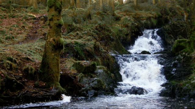 Small stream and waterfall in rural Dumfries and Galloway, Scotland Small stream and waterfall in rural Dumfries and Galloway, Scotland. The stream (burn) is known locally as Kennewick Burn and is in the Lauriestion Forest. dumfries and galloway stock videos & royalty-free footage