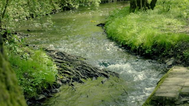 美しい森林谷を流れる小河川。タンポポとクリークでの木の根を渦巻き模様のニットの花輪。 - チェコ共和国点の映像素材/bロール