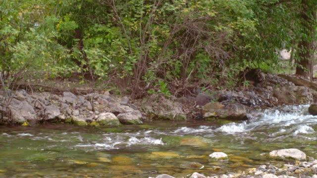 Small Stream in a Wilderness Area - video