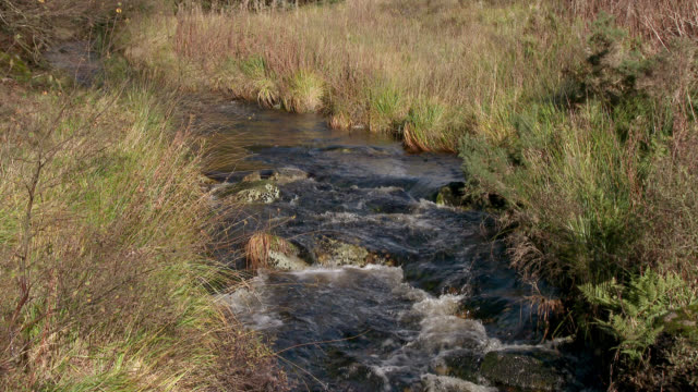 Small stream in rural Scotland 4K footage shot at 50fps and interpreted at 25fps to give a slow motion dumfries and galloway stock videos & royalty-free footage