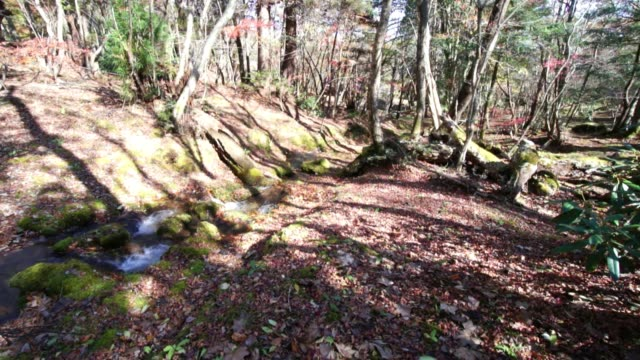 A small stream in the mountains.Fall mountain stream. video