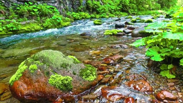yaz aylarında koscieliska tatra dağlarında küçük dere - zakopane stok videoları ve detay görüntü çekimi