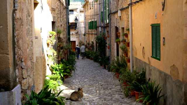猫とマヨルカ島の小さな通り - ヴァルデモサ点の映像素材/bロール