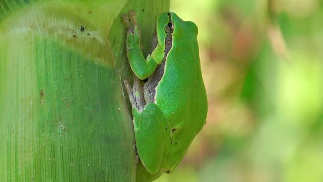 Small tree frog camuflage in field video