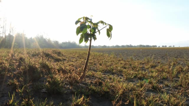 Small tree is stand alone on green grass with sunrise background location at south of thailand