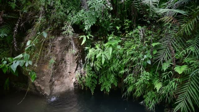 piccola cascata nella giungla tropicale, java, indonesia - cespuglio tropicale video stock e b–roll