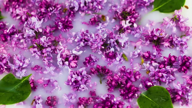 small various flowers of lilac are scattered in milk close-up. Slow motion 4k. Floral fresh spring background with text space