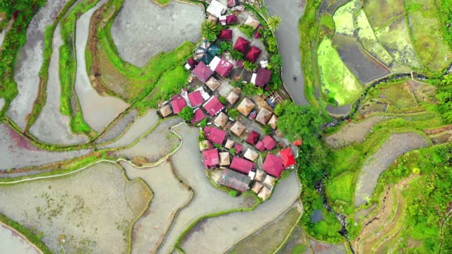 Small village in the middle of rice terraces in Philippines. Wonderful agriculture in a valley surrended by mountains in a beautiful day - Aerial view with a drone 4K Banaue's rice terraces with a stream and small farm in nature. One of the most beautiful agriculture in Philippines, with the most wonderful view.  Perfect landscape in an amazing place, with the respect of environment banaue stock videos & royalty-free footage