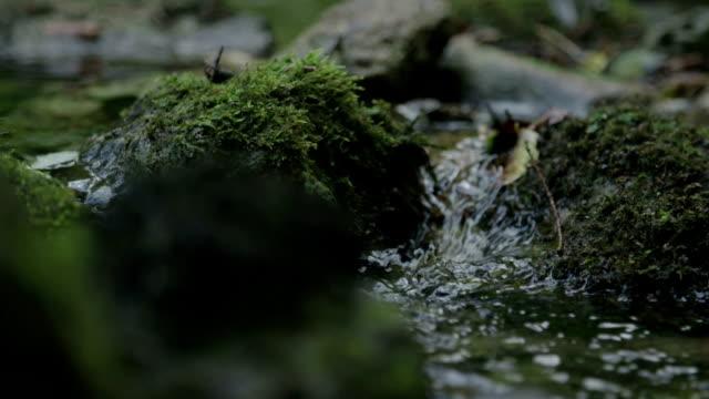 small water stream - ручей стоковые видео и кадры b-roll