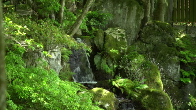 small waterfall in a lush japanese garden - gardino video stock e b–roll
