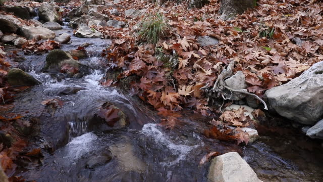 Small waterfall in forest, Autumn,