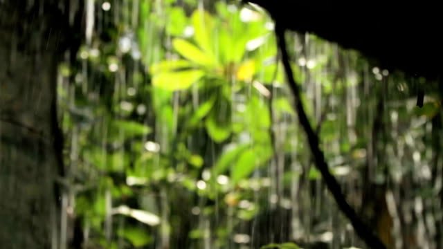 kleiner wasserfall. wasser fließt über die felsen, umgeben von pflanzen. wat saket golden mount. bangkok, thailand - baumgruppe stock-videos und b-roll-filmmaterial