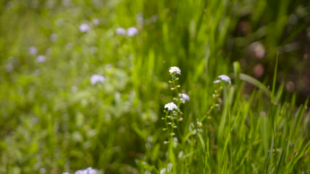 Small white and light purple flowers in tall grass