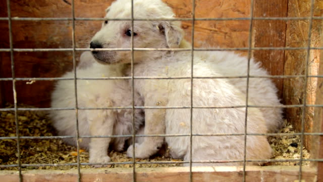 Small white puppies in cages waiting to be adopted Small white puppies in cages waiting to be adopted homeless shelter stock videos & royalty-free footage
