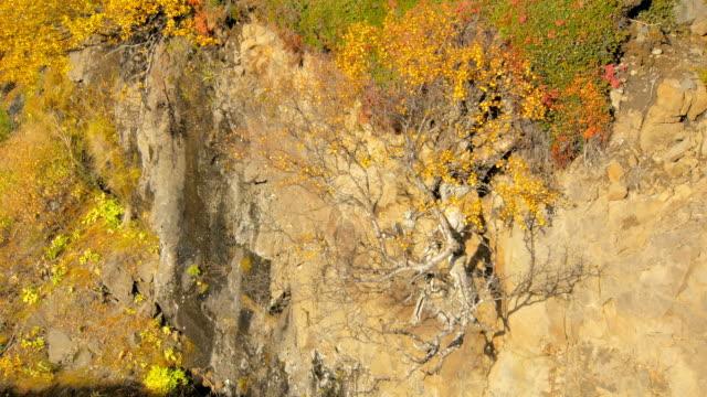små gulnade nordisk björk växer från klipporna sluttar, visa i solig dag - norrbotten bildbanksvideor och videomaterial från bakom kulisserna