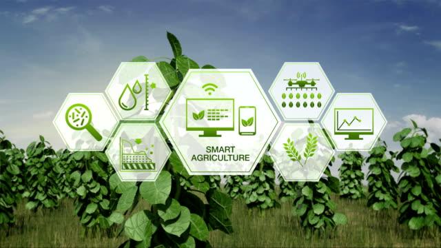 smart agriculture smart farming, hexagon information graphic icon on plant green field, internet of things. 4th industrial revolution. 4k size. - dokładność filmów i materiałów b-roll