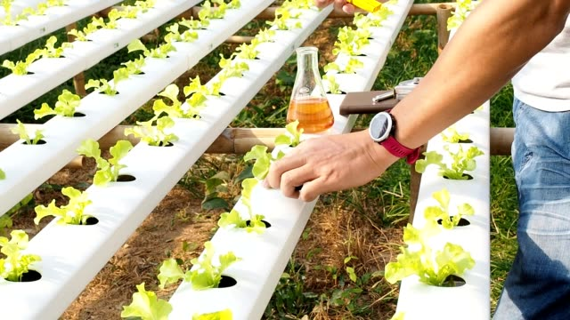 Smart agriculture technology concept - Farmer checking water ph value of organic hydroponic red oak in plant nursery farm. Smart agriculture Smart agriculture technology concept - Farmer checking water ph value of organic hydroponic red oak in plant nursery farm. Smart agriculture hydroponics stock videos & royalty-free footage