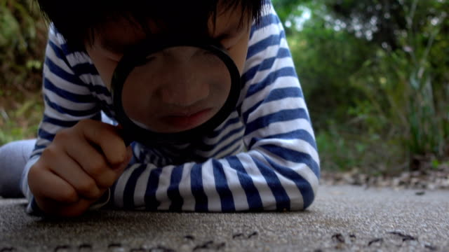 Smart boy watching ants with magnifying glass