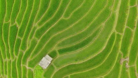 vidéos et rushes de technologie d'agriculture numérique intelligente par la collecte futuriste de données de capteurs - biologie