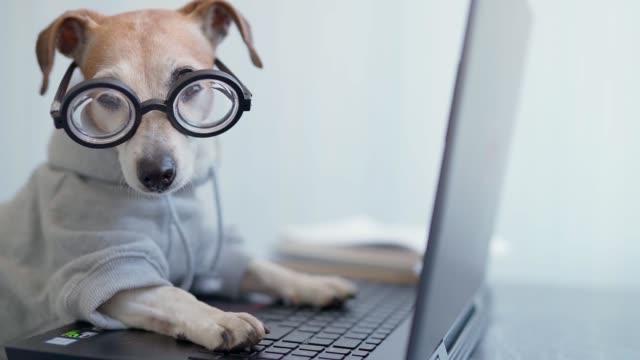 Smart dog using computer. - video