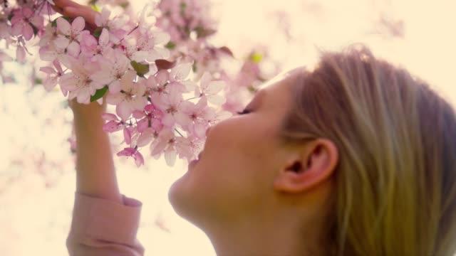запах сакуры - spring стоковые видео и кадры b-roll