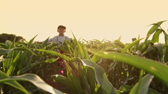 Smiling carefree boy running in sunny,rural corn field,slow motion