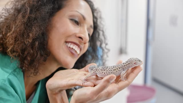 Smiling female vet holding a gecko in her hand and petting it