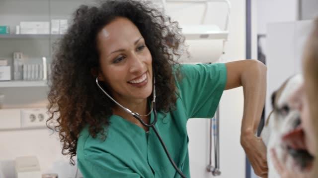 leende kvinna veterinären lyssnar på hundens hjärta och lungor - veterinär bildbanksvideor och videomaterial från bakom kulisserna