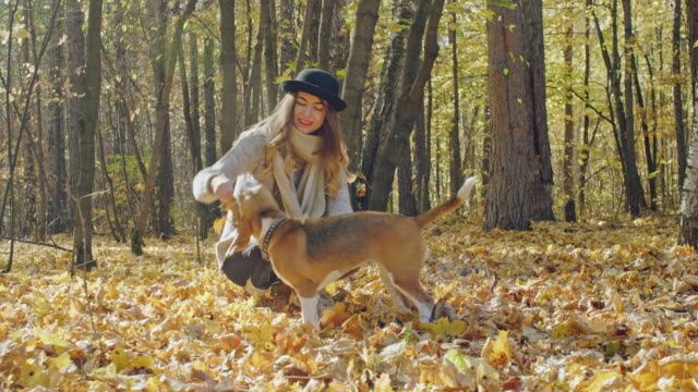 Smiling girl sitting with jumping dog in autumn park video