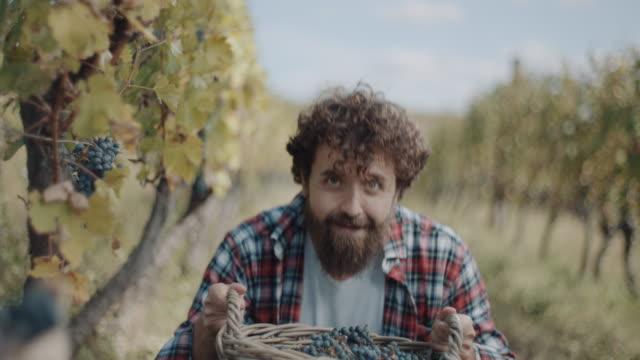 vídeos de stock e filmes b-roll de smiling man beside basket full of grapes - uva shiraz