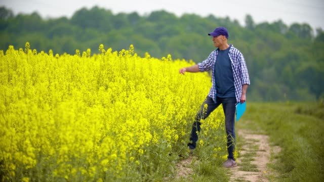 smiling mature farmer examining agricultural field - canola video stock e b–roll