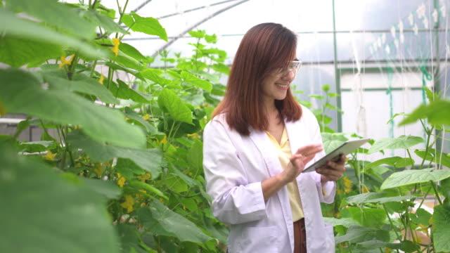 lächeln von wissenschaftler nach der inspektion melonenbaum und sammeln daten auf einem digitalen tablet - gewächshäuser stock-videos und b-roll-filmmaterial