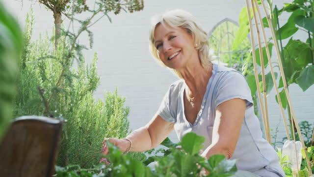 vídeos de stock, filmes e b-roll de mulher aposentada sorridente cavando canteiros de flores no jardim em casa - hobbie