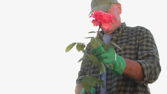 Smiling senior gardener Senior man working on his flower farm plaid stock videos & royalty-free footage