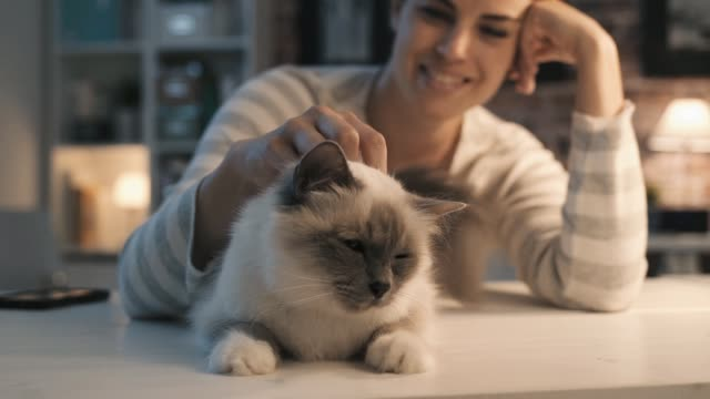 Smiling woman caressing her cat at home Smiling young woman cuddling her cat lying on a table, loving pets and lifestyle concept affectionate stock videos & royalty-free footage