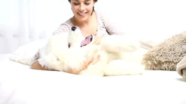 vídeos de stock e filmes b-roll de smiling woman play with pet dog - samoiedo